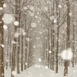 Febbraio 2013 - La magia della neve